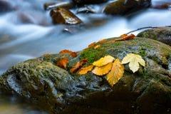 Nice autumn leafs on wet stones Stock Photo