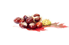 Nice autumn leaves and chestnuts on a white. Stock Photography