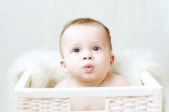 Nice baby in white basket Stock Photography