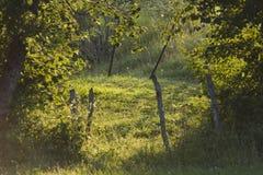 Nice backlight on countryside, Jura, France Stock Photography