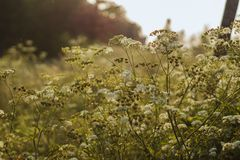 Colourfull backlit meadow royalty free stock photo