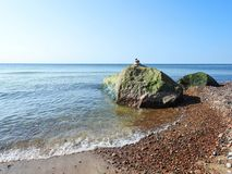 Baltic sea coast and beautiful  stones , Lithuania Stock Image