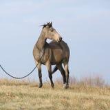 Nice bay quarter horse
