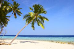 NICE BEACH WITH PALM TREES Stock Photography