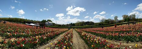 BEAUTIFUL PLACE WITH FLOWER GARDEN royalty free stock photos