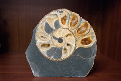 Nice big decorative gold shell in stone Royalty Free Stock Photography