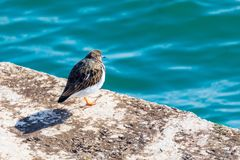 Nice bird seagull looking at the sea. stock images