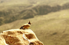 A nice little bulbul bird. Perched on a rock under the sun stock photos