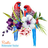 Nice birds Royalty Free Stock Photos