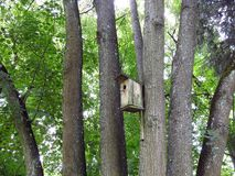 Beautiful wooden nesting-box and trees, Lithuania stock photo