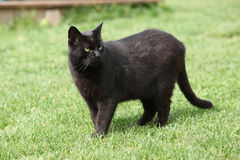 Nice black cat in the garden Stock Photos