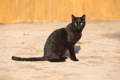 Nice black cat sitting Stock Photography