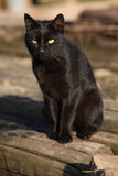 Nice black cat sitting Royalty Free Stock Photo