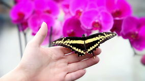 A nice black and yellow butterfly on an anonymous hand stock footage