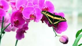 Nice black and yellow butterfly on a plant stock video