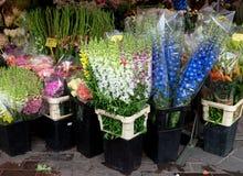 Nice - Bloemen in de straatmarkt royalty-vrije stock foto