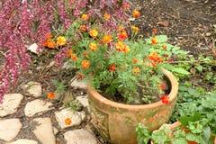 Nice blommar i trädgård Royaltyfri Fotografi