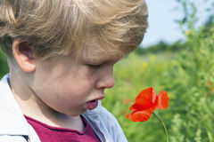Nice blond boy with a red poppy in his hand. Stock Photo