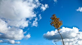 Nice blue sky with clouds formation and trees Stock Photos