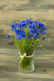 Nice bluebottles bouquet Stock Photography