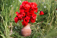 Nice bouquet of red poppy flowers Stock Image