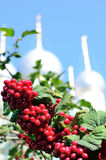 Nice branch with red berries with background of christian church. Royalty Free Stock Image