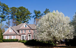 Nice Brick House with Blooming Pear Tree royalty free stock images
