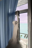 The nice bridal dress is hanging on the window. Stock Photo