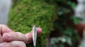 A nice brown butterfly on an anonymous hand stock footage