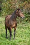 Nice brown pony