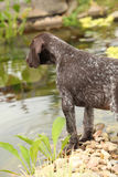 Nice brown puppy in the garden Royalty Free Stock Photography