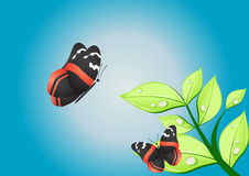 Nice butterflies Royalty Free Stock Images
