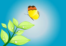 Nice butterfly Stock Photography
