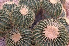 Nice cactus detail. Photo detail of nice cactus stock photos