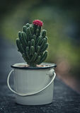 Nice cactus with pink flower Royalty Free Stock Photo