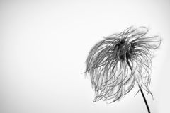 Nice calm flower in the wind. On white background Royalty Free Stock Photo