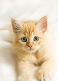 Nice cat Royalty Free Stock Photography