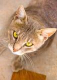 Nice cat Stock Image