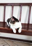 Nice cat. On bench Stock Images