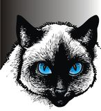 Nice cat with blue eyes Stock Image