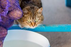 Nice cat with expressive green eyes in kitchen in front of buck. Et of water stock images