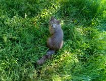 A nice cat on the green background . Pet royalty free stock photos