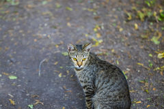 Nice cat portrait. Cat is sitting on the road Royalty Free Stock Images