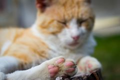 Nice cat relaxing on a piece of wood on the huge garden. Resting in nature Stock Photography