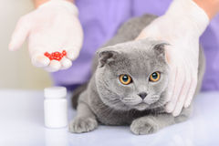Nice cat sitting on the table Stock Photography
