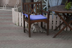 Nice cat. Washing under the chair royalty free stock photo