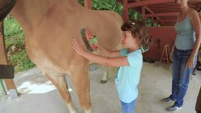 Nice child grooming horse and smile FDV. A nice little girl is grooming an horse and smiles happy with her mother stock video