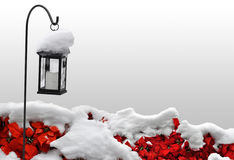 Nice Christmas background with space for text. Winter background with a traditional candle lantern and bright poinsettias covered in thick snow royalty free stock photography
