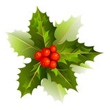 nice Christmas holly branch Royalty Free Stock Photography
