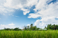 Nice clear blue sky at green field Royalty Free Stock Image
